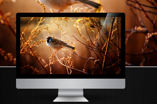 nature-bird-wallpaper